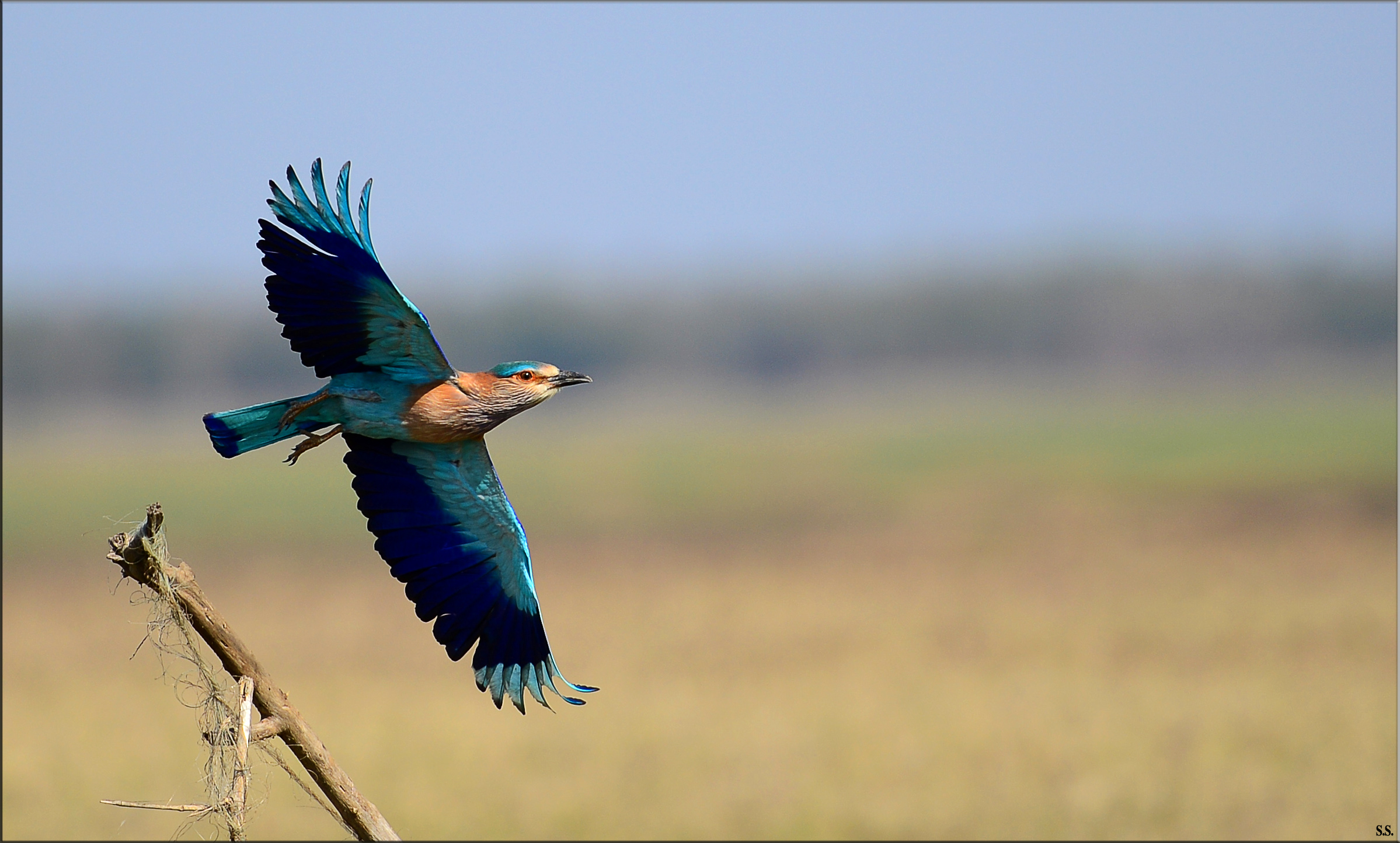 Image result for chhatarpur mp tourism पक्षी विहार