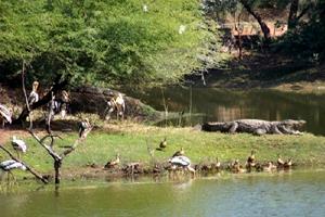 Image result for वन विहार राष्ट्रीय उद्यान